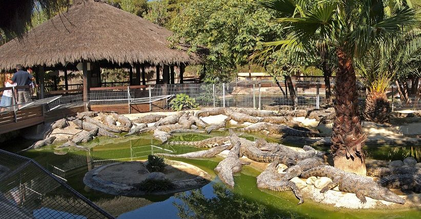 Crocodile Park  full of Crocodiles